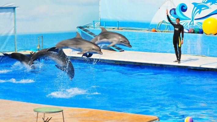 Дельфинарий + страусиная ферма